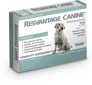 RESVANTAGE 維蘆醇 – 白藜蘆醇 (狗) 30粒
